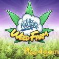 Wiz Khalifas Weed Farm Hack - Get Wiz Khalifas Weed Farm Gems For Free